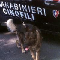 Olly, il cane poliziotto trova un chilo e mezzo di marijuana