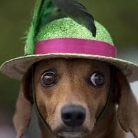 Pet Carnival a San Carlo Arena, interviene la Asl