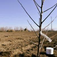 Rubate 400 piante nel terreno confiscato alla camorra