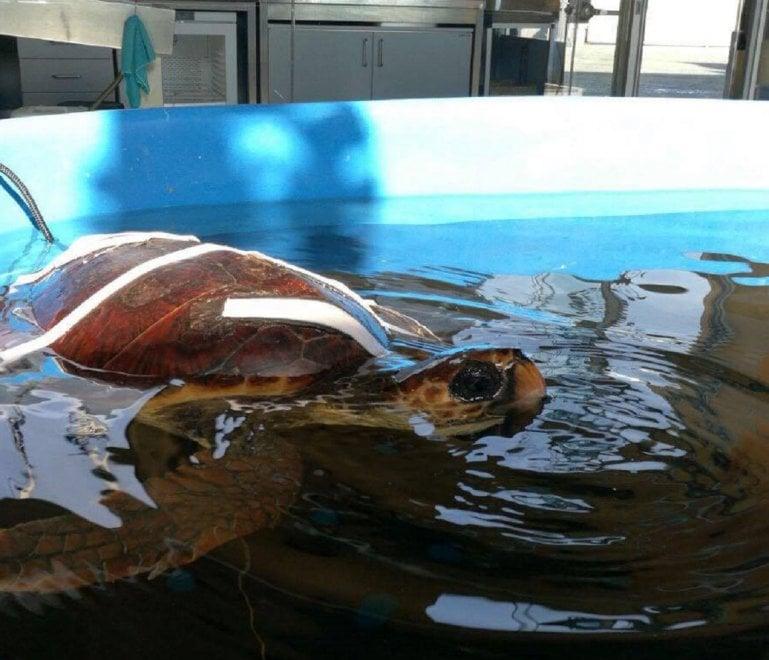 Dall'alto Lazio a Portici: Giorgia la tartaruga continuerà a vivere