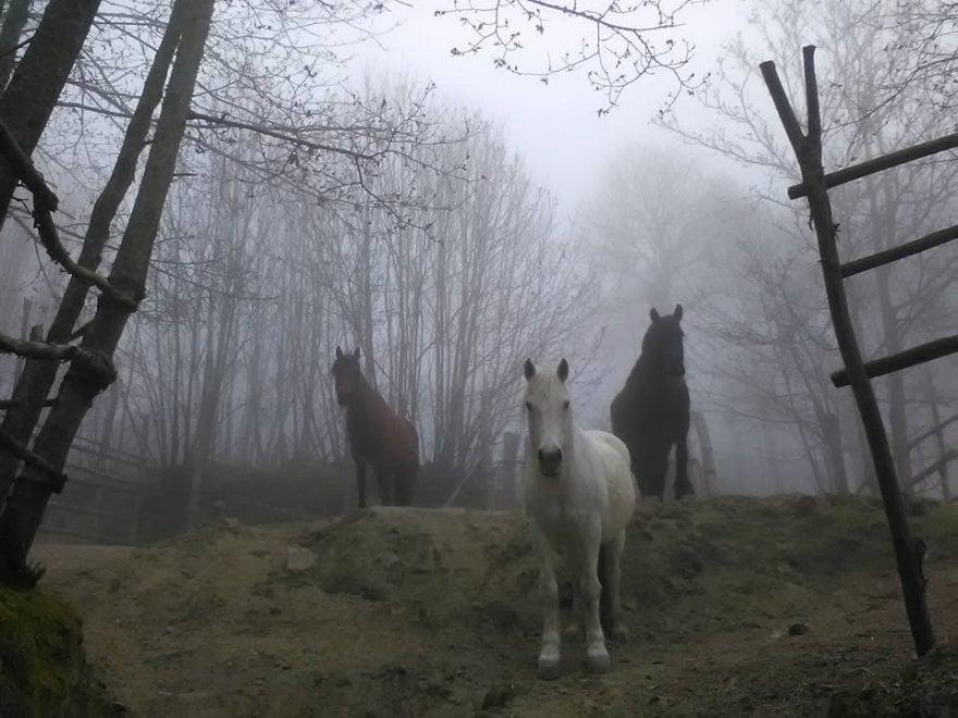 Ischia, cavalli nella nebbia alle falde dell'Epomeo: è il saluto dell'inverno