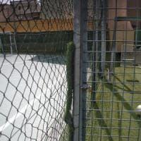 Orrore nel Napoletano, tredicenne disabile violentato da undici minorenni