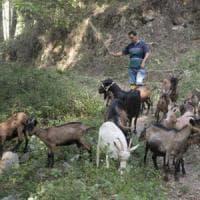 Cilento, adottare una capra su Facebook fa bene al cuore