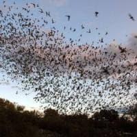 Universo pipistrelli, uno studio per salvare gli amici degli allevatori