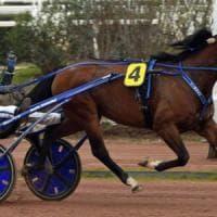 Ippica - Verso il Lotteria di Agnano, i 24 cavalli ammessi: la star è Timoko