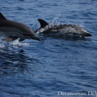 Delfini e capodogli nel mare di Ischia, via all'iter per la tutela