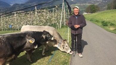 """Bassolino in posa con le mucche """"sfida"""" Berlusconi su Twitter"""