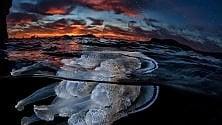Suggestioni: la medusa a galla nelle immagini
