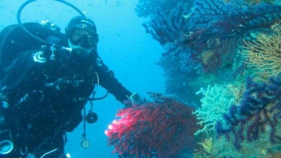 Blueblitz, nel mare di Ischia alla scoperta della biodiversità