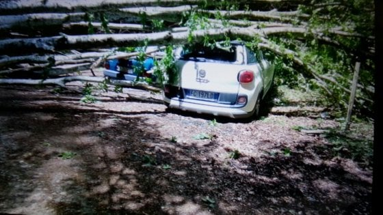 Albero abbattuto dal vento si schianta su un'auto, salva famiglia salernitana