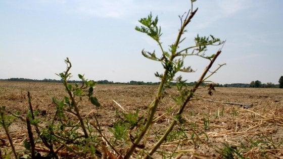 Incubo siccità in Cilento, i preti pregano per far piovere