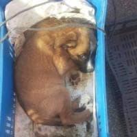 Spara al suo cagnolino e lo uccide, 73enne denunciato in Cilento