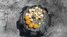 Frutta per gli animali  sul ceppo bruciato    E il cucciolo beve l'acqua