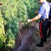 Potenza, arrestato architetto per coltivazione di marijuana