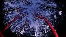 Gli scatti struggenti  della pineta carbonizzata