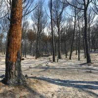 """Troppi incendi, gli ornitologi: """"Si sospenda l'apertura della stagione della caccia"""""""