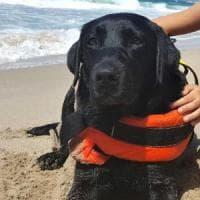 Lux, il cane 'eroe': salva bambina in mare a Palinuro
