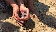 Tartarughine in spiaggia schiusa tra i bagnanti