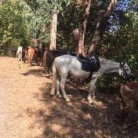 Fiamme nel Centro Ippico a Pozzuoli: locali distrutti, salvi i cavalli