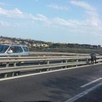 Napoli, un cavallo contromano sulla superstrada