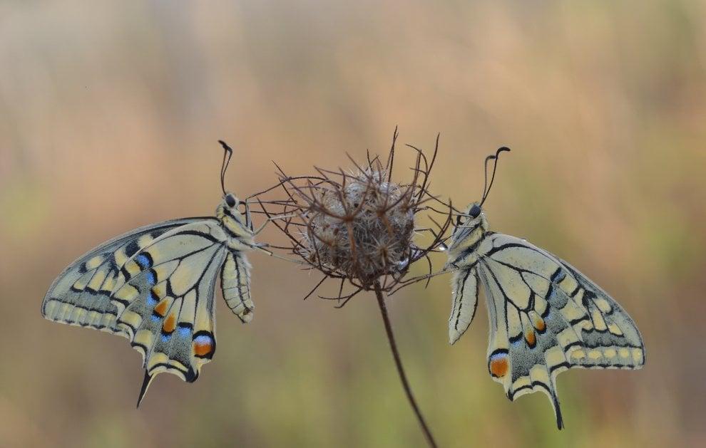 Sele-Tanagro e Monti Eremita-Marzano, la biodiversità in un libro