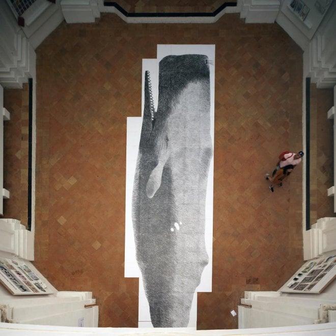 Ischia, il capodoglio fedele in una installazione di 13 metri
