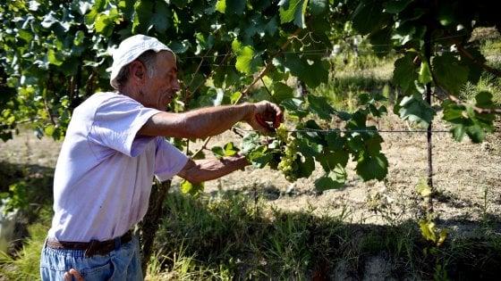 La Campania del vino: le anticipazioni dei Tre Bicchieri Gambero Rosso