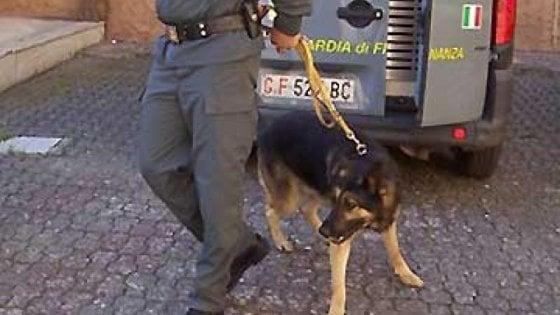 Salerno, cani antifroga su bus con studenti