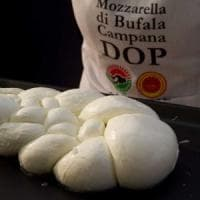 Mozzarella campana dop, produzione record nei primi 8 mesi