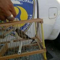 Bracconieri e traffico di cani e cardellini: in azione carabinieri e vigili