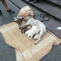 Cuccioli e clochard, le proteste degli animalisti