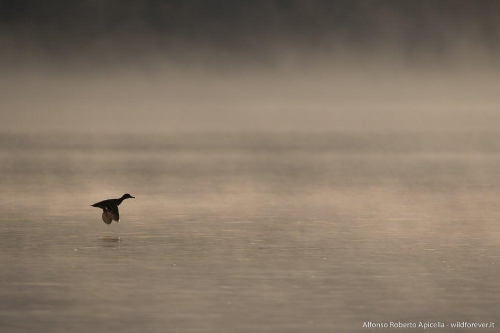Tra Cilento e Basilicata, la nebbia sui laghi si trasforma in magia