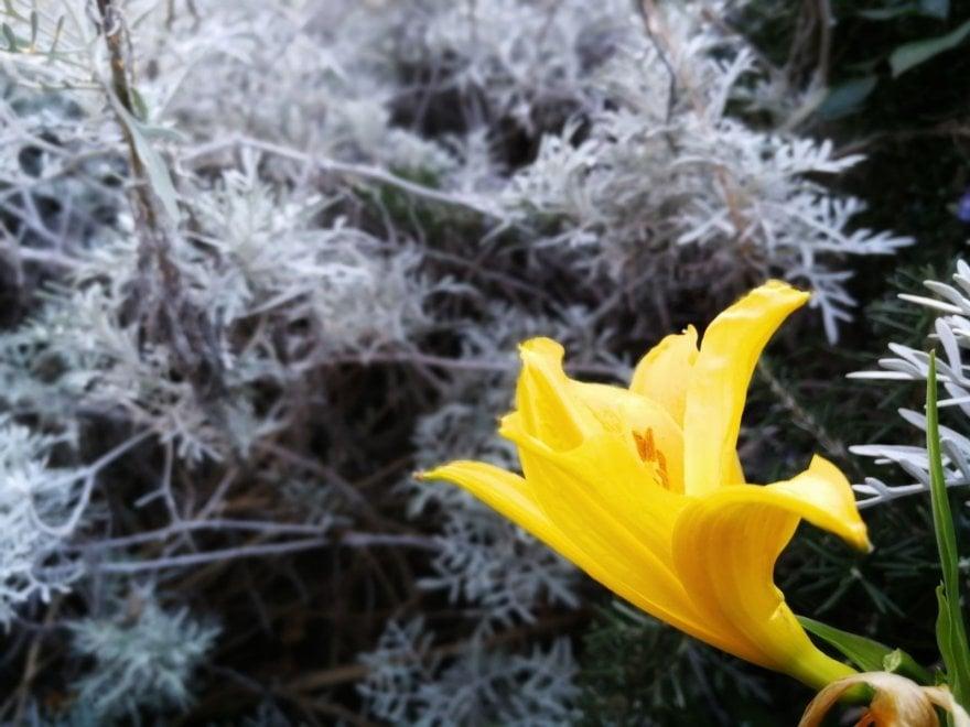 Giardini La Mortella, a Ischia l'inverno ha i colori della primavera