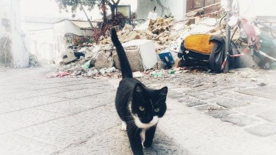 """3300 pasti per i gatti randagi di Ischia: il cuore dei volontari e l'aiuto di """"LoveFood"""""""