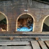Una nuova cuccia per i cani del Vesuvio