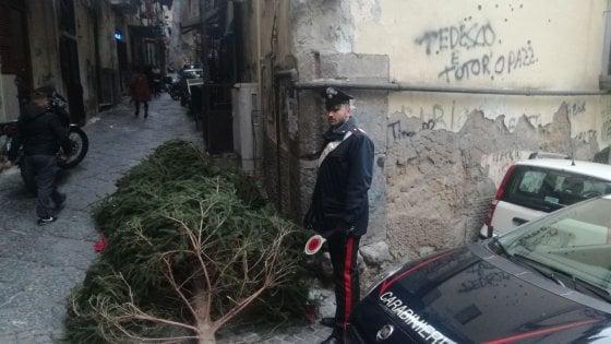 Napoli Ritrovato L Albero Di Natale Rubato Era Nascosto Ai