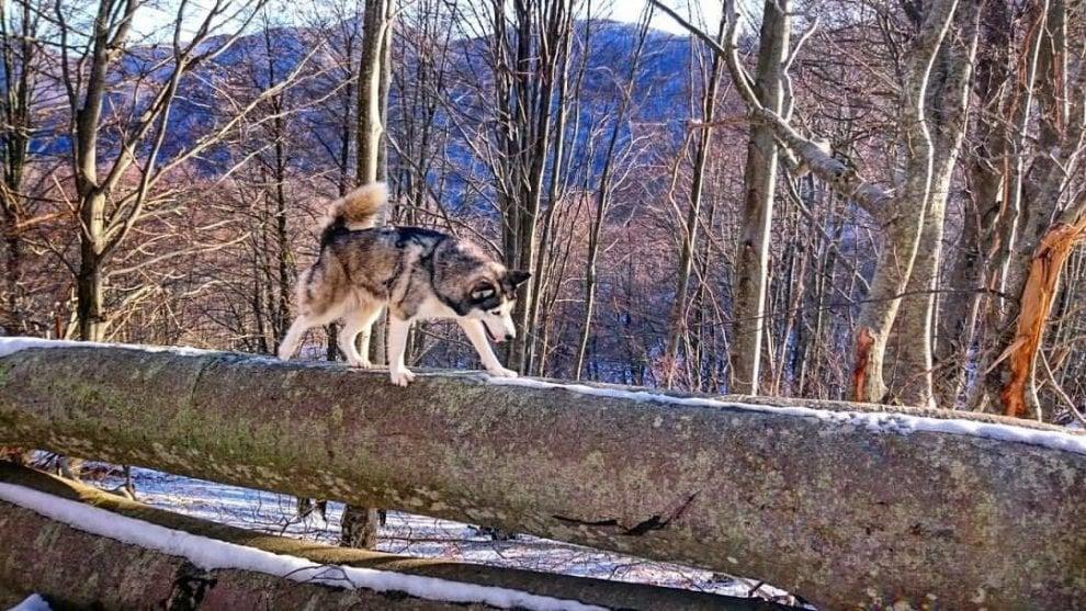 Primo giorno dell'anno sul monte Cervati in Cilento, il saluto degli husky