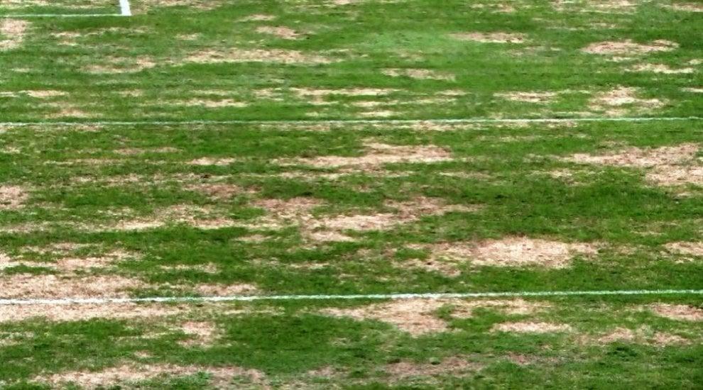 Ischia, il campo sportivo come Spelacchio: le foto diventano virali