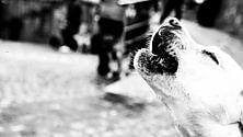 Cani, pony e gatti: la benedizione  di Sant'Antonio
