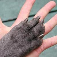 Potenza, spara a un cane: denunciato 36enne di Pietragalla
