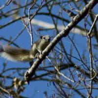 """Dagli scoiattoli all'ailanto, quegli """"alieni"""" che sono tra noi"""