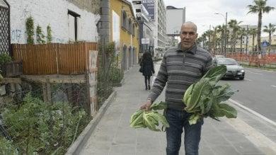 """Mustafa, agricoltore in via Marina:   video   """"Il mio orto urbano in mezzo al caos""""   foto"""