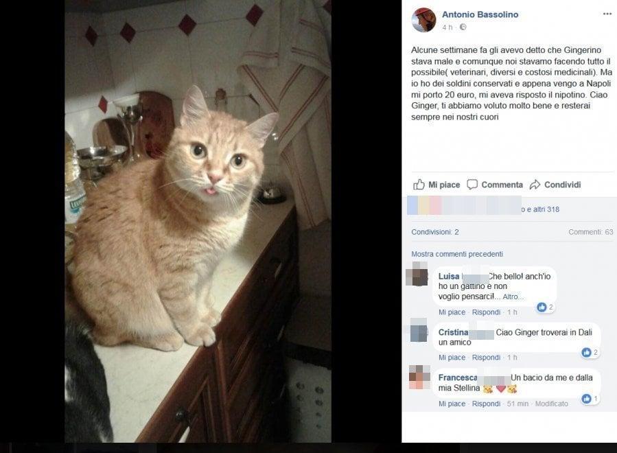 """""""Ciao Ginger"""", Bassolino dice addio al gatto su Fb"""