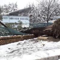 Neve a Potenza, c'è un numero per le emergenze