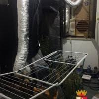 Serra in casa per la coltivazione di marijuana, arrestato