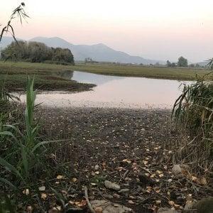 Capua, festa della Lipu nell'oasi Salicelle