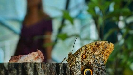 """Potenza, dove abitano le farfalle: riapre il """"Parco dei colori"""" di Castelgrande"""