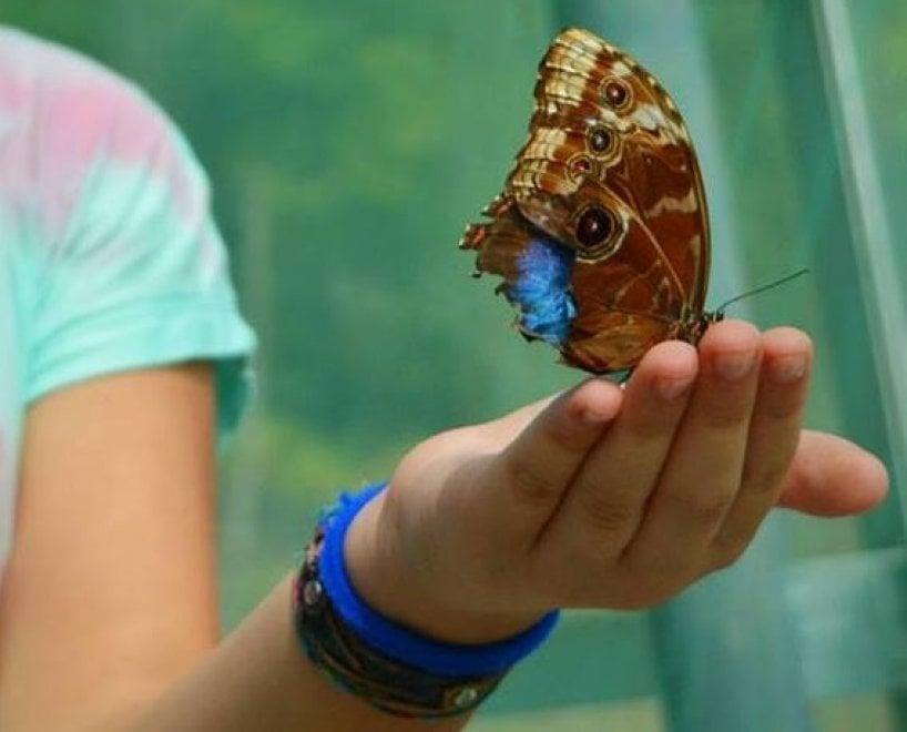 Potenza, ecco la casa delle farfalle