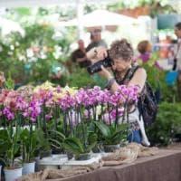 Ischia, torna Ipomea: un trionfo di piante e fiori (anche da mangiare)