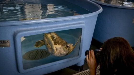 Giornata mondiale degli Oceani, porte aperte al centro di ricerca sulle tartarughe marine